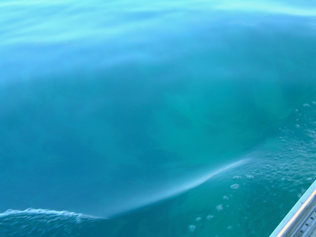 blue water from deck of a yacht